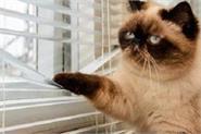 scientist advice   keep the cat indoors