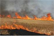 35 million tonnes of starch burns in haryana punjab every year