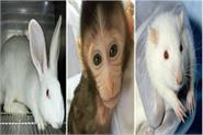 iit kanpur invented 3d artificial skin animals
