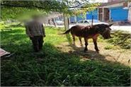 horse quarantine in jammu rajouri
