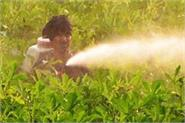 center asks fertilizer companies to sell non urea fertilizers at old price