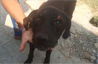 वफादारी: मालिक की मौत पर इतना रोया कुत्ता, हो गया अंधा, आज भी बहा रहा आंसू