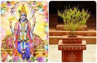 Kartika Month: इस दिन से शुरु होगा कार्तिक मास? जानें इस माह में तुलसी पूजन का महत्व