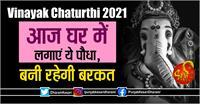 Vinayak Chaturthi 2021: आज घर में लगाएं ये पौधा, बनी रहेगी बरकत