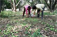 यूपीःकोरोना संकट के बीच तेज रफ्तार आंधी व बरसात,आम और जामुन की फसल को खासा नुकसान