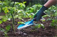 किसानों को रियायती कीमत पर उर्वरकों मुहैया के लिए प्रतिबद्ध: सरकार