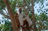 ऑक्सीजन लेवल पूरा करने के लिए बुजुर्ग का अनोखा तरीका, पेड़ पर मचान बनाकर बिताने लगे समय