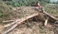 बगैर परमिशन के काट दिए दर्जनों हरे पेड़, वन विभाग के अधिकारियों के साथ भी हुई बदसलूकी