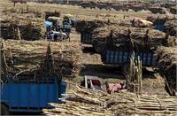 किसानों को गन्ना भुगतान में देरी करने वालीशुगर मिल बजाज हिंदुस्तान समेत इन समूहों पर है योगी सरकार की कड़ी नजर