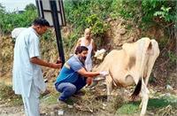 सुनील कुमार के काम को सलाम, बेसहारा गौवंश की सेवा को बना लिया अपना कर्म