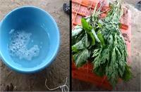मुरझाई हरी सब्जियों को केमिकल से जिंदा कर रहे दुकानदार, Video देख उड़ जाएंगे होश