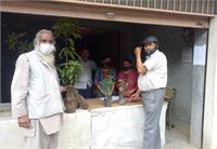 हमीरपुर उद्यान विभाग इस बार लगाएगा 45 हजार फलदार पौधे