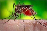 डेंगू का डंक : चार दिन में आधा दर्जन मरीज, वायरल के भी बढ़ रहे केस