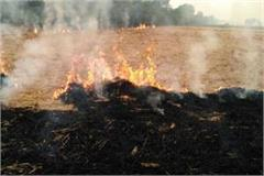 stubble burning farmers will be blacklisted