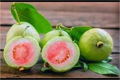 now the government will buy orange and guava after vegetables