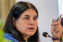 bjp mp maneka gandhi raises questions on the law of up