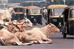 many have lost their lives due to accidents of unruly animals