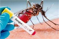 dengue also reached the half century 4 cases of malaria also surfaced