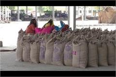 piles of mustard and wheat sacks are not being raised from the grain market