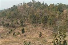 the world s most poisonous and dangerous snake habitat near the gold mines