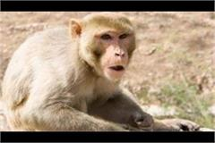 people said in corporation s program  get rid of terrorist monkeys