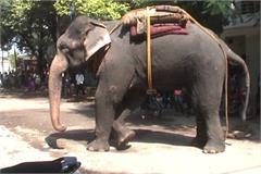elephant nuts