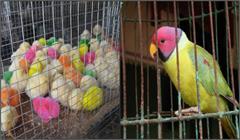 bird home ban