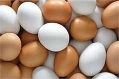 bundelkhand  chinese eggs  plastic