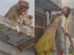 vrindavan holi monkey
