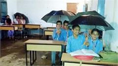 school students umbrellas study