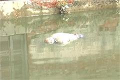 bhiwani rain death corpses police