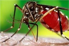 dengue new virus knock in the country