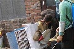 dengue larvae found in 2 houses