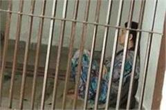 honeypreet condition inside jail