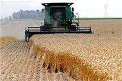 punjab to distribute 2 80 lakh quintals of subsidised seeds