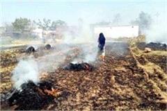 farmers celebrate holi harvesting in front of mla