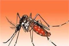 dengue patient died