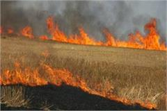 case filed against 3 people for burning stubble