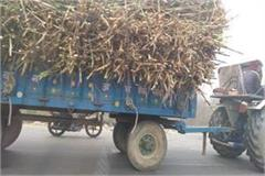 overload trolley with tractor is runnig carelessly