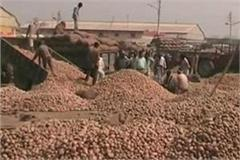 frustrated by not getting price the farmers thrown the potatoes on the roads