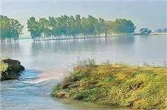 haryana  sirsa  crops submerged  canal  water