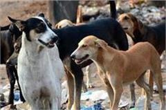 horror of the stray dogs