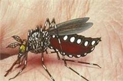 mobile app will warn from dengue