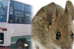 mice in the hrtc s authorized dhaba s kitchen video viral