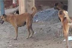 panic stroke dogs in jind