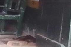 teacher in square opened door of school inside was dangerous