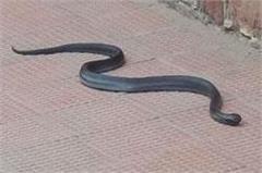 snake in the retiring room of mathura junction  a panic among travelers