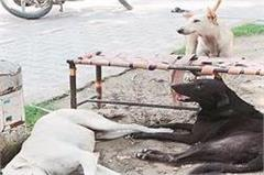 panic of stray dogs lack of funds no plan to get rid of