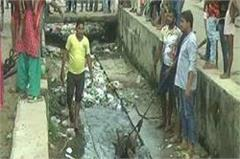 dropped bulls in open drains fearless youths rescue operation