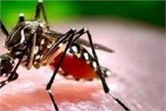 dangerous danger of increased dengue in bilaspur